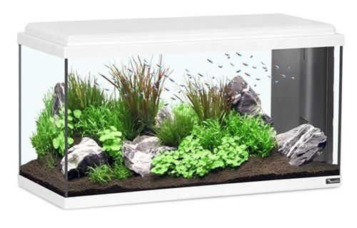 Aquatlantis Aquarium Advance LED 80 - wit