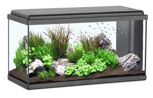 Aquatlantis Aquarium Advance LED 80 - zwart kopen?