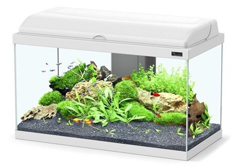 Aquatlantis Aquarium Aquadream 60 Led - wit