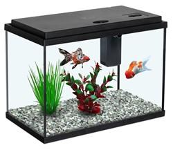 Aquatlantis Funny Fish 35 - zwart kopen?