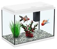 Aquatlantis Funny Fish 35 - wit kopen?