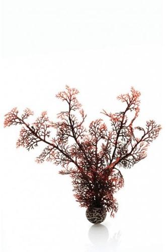 BiOrb Hoornkoraal medium - donkerrood