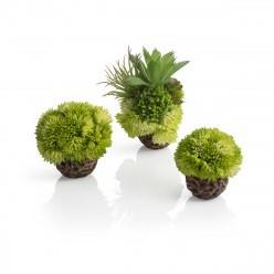 BiOrb koraalballenset groen