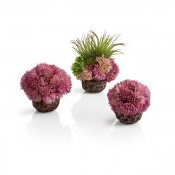 BiOrb koraalballenset paars