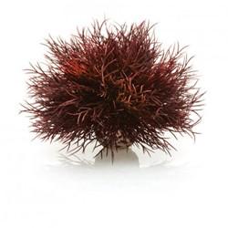BiOrb Aquarium zeelelie - donkerrood