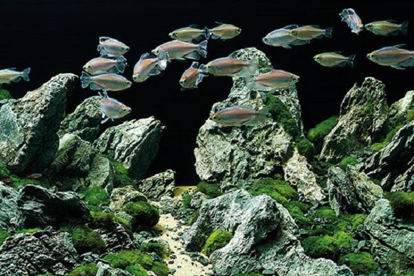 Aquariumproducts - Voorpag - Actie banner 3